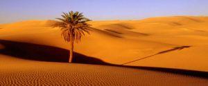 Ruta al Desierto 8 Días Fez a Marrakech